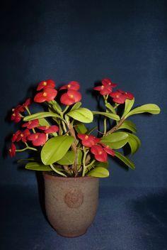 Euphorbia mili (crown of thorns, Christ plant, Christ thorn) (pompás kutyatej, krisztustövis) - My clay flower https://www.facebook.com/Csodavirag