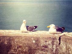 Seagulls by Kameron Walsh
