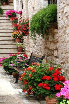 judithdcollins:Flowers of Spello, Perugia, Italy, Umbria