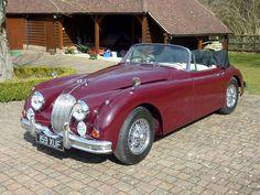Jaguar - image