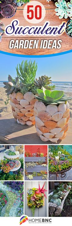 Best designs for succulent gardening Best designs for succulent gardening Succulent Landscaping, Succulent Gardening, Garden Plants, House Plants, Garden Landscaping, Kitchen Gardening, Air Plants, Hanging Succulents, Succulents In Containers