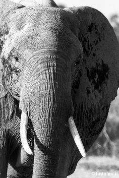 Elefante | Parco Nazionale dello Tsavo Est | Kenya by Tuttoleo, via Flickr