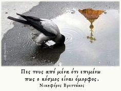 Be A Better Person, Bird, Animals, Animales, Animaux, Birds, Animal, Animais