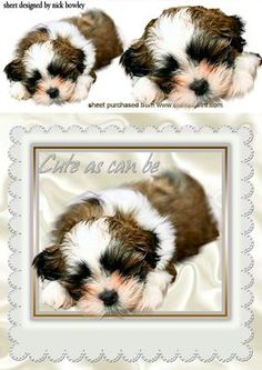 AS CUTE AS CAN BE PUPPY IN A WHITE FRAME on Craftsuprint - Add To Basket!