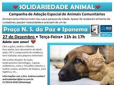 BONDE DA BARDOT: RJ: Adote um pet na Campanha de Adoção Especial de Animais Comunitários, que acontece em Ipanema, nesta terça (27/12)