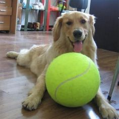Dog Toys for Large Dogs Play Dog Ball Launcher Inflatable Tennis Ball Thrower Chucker Ball Training Pet Dog Chew Toys Pet Dogs, Dogs And Puppies, Pets, Pet Puppy, Doggies, Puppy Play, Havanese Puppies, Goldendoodles, Puppy Eyes