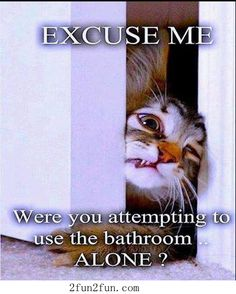 Cute cat - Funny Pictures
