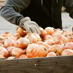 We just LOVE fall! Just Love, Falling In Love, Onion, Harvest, Peach, Sweets, Fruit, Country, Usa