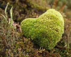 Nature's heart Photo: randihausken (CC BY-NC 2.0)