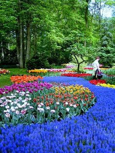 River of flowers in the Keukenhof park occupying 32 hectares of land (Netherlands, 2008) / River of flowers in the Keukenhof Park Occupying 32 hectares of land (Holland, 2008)
