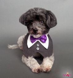 Dark gray dog wedding tuxedo. Very chic! Choose many different colors of bow ties or supply your own fabric to match your wedding colors!