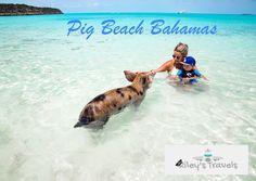 Bahamas - Pig Beach
