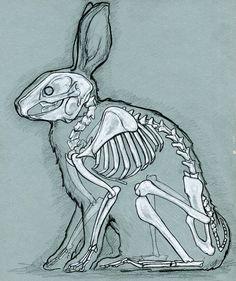 Rabbit anatomy by bigredsharks.deviantart.com on @deviantART