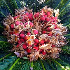 A cycad center along a walk in Foley Sago Palm, Christmas Wreaths, Seeds, Noblesse, Palms, Holiday Decor, Amazing, Garden, Instagram Posts