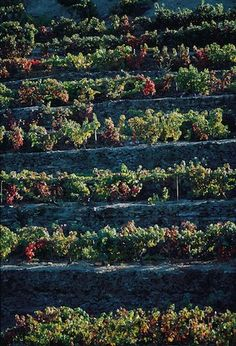 The Possibilities in Porto: Anna Selby visits the Douro Valley, Portugal - via The Arbuturian ‏@The Arbuturian Photo: Vines
