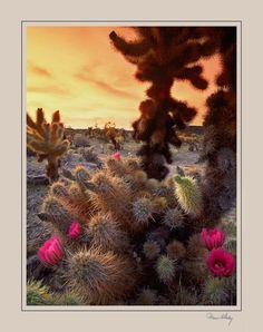 High Desert Evening View - joshua tree, California