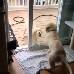 Puppies crying to get reunited