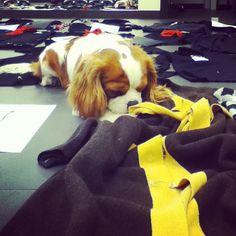 @moschinofficial Charlie sta scegliendo le maglie del prossimo inverno  Photo by valewallas • Instagram