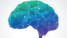 Nuestras neuronas son las que mandan, nos inventamos el mundo y no somos la cumbre de la evolución