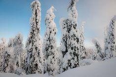 Eine tolle Schneelandschaft! Aber wieso haften die großen Schneekissen an den Bäumen? Mehr dazu in unserem Blog! #KalevalaSpirit #Finntastisch #Tykkylumi