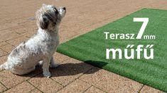 Marvel, Dogs, Animals, Animales, Animaux, Pet Dogs, Doggies, Animal, Animais