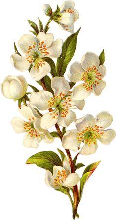 cajoline_vintageflowers3_8 (264x500, 222Kb)