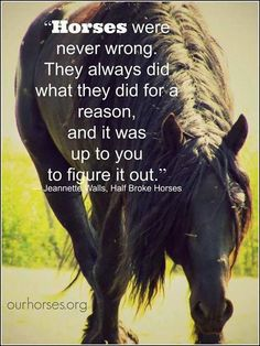Horses are never wrong...