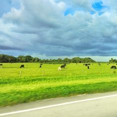 #stpetersburg #gotohome #family #returnhome #sky #cloudy #clouds #green #grass #cow #tree #afterlongweek #itsfriday