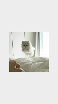 iphone wallpaper cat - bam animals - # b. - iphone wallpaper cat – bam animals – # bam pair – (no - Cartoon Wallpaper, Iphone Wallpaper Cat, Funny Cat Wallpaper, Tier Wallpaper, Cute Cat Wallpaper, Mood Wallpaper, Aesthetic Pastel Wallpaper, Animal Wallpaper, Aesthetic Wallpapers