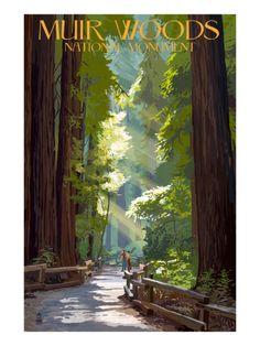 Muir Woods National Monument, California - Pathway Print by Lantern Press at Art.com