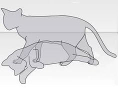schrodinger cat - Google Search