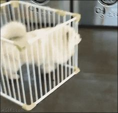 Funny GIF Of A Dog