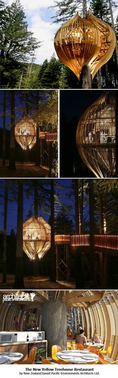 treehouse restaurant in Auckland, New Zealand