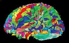 Efectos de la meditación en la estructura del cerebro   Cuauhtemock