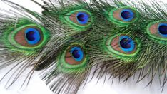 Peacock FeathersEight All Seeing Eye by CherylsGoodStuff on Etsy