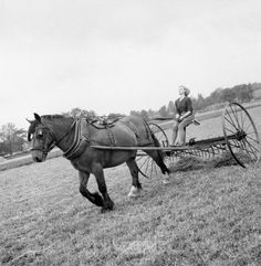 New recruit to the Women's Land Army, Iris Joyce (19), learns to drive the horse-drawn hay rake as part of her training at the Northampton Institute of Agriculture near Moulton in 1942.
