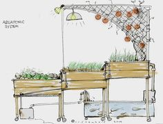 aquaponic diagrams | WELCOME TO AQUAPONIC HERBS!