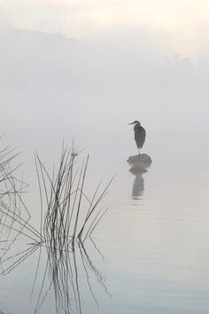 Usa Photograph - Heron In The Morning Mist by Eric Zhang Japanese Painting, Chinese Painting, Chinese Art, Japanese Art, Watercolor Landscape, Watercolor Paintings, Abstract Paintings, Watercolours, Oil Paintings