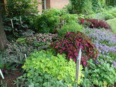 Dutchess county MG shade garden