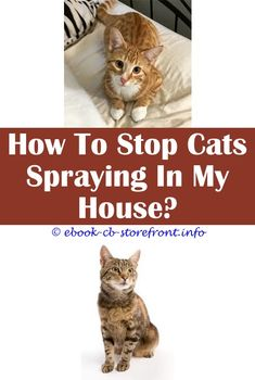 8 Magnificent Tips: Cats Spraying Poop how to use wound spray for cat.Cats Spraying Poop how to stop cat from spraying on object.Cat Dander Spray Uk.