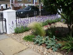 again with the lavender and grasses may go with that then gravel gardenterrace gardenfront