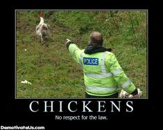 Google Image Result for http://trentonstahl.files.wordpress.com/2009/12/chickens-no-respect-for-the-law-demotivational-poster.jpg