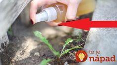 Toto je dôvod, pre ktorý by ste mali mať jablčný ocot vždy poruke! Apple Cider Viniger, Apple Cidar, Plant Pests, Small Farm, Plantar, Cider Vinegar, Home Remedies, Garden Plants, Gardening Tips
