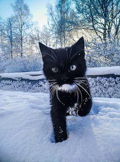 :) Snow kitty!