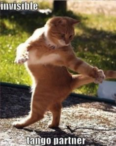 Funny Cat Pics From Around The Internet