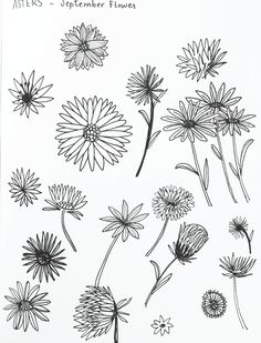 27 best aster tattoo images in 2017 Aster Tattoo, Aster Flower Tattoos, Flower Finger Tattoos, Birth Flower Tattoos, Flower Tattoo Drawings, Flower Tattoo Designs, Tattoo Flowers, Tattoo Sketches, September Birth Flower