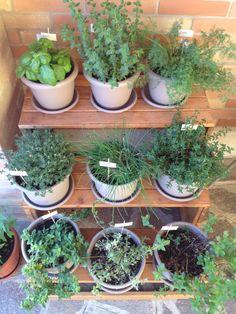 Le nostre #erbe #aromatiche crescono! #orto #giardino #garden #green