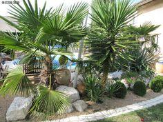 massif de palmiers et yuccas au jardin garden exotic. Black Bedroom Furniture Sets. Home Design Ideas