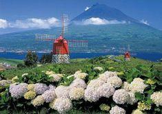 Explore the 'Azores nine