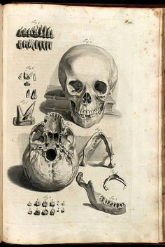 Anatomy Illustrations 1600s | Flickr - Photo Sharing!